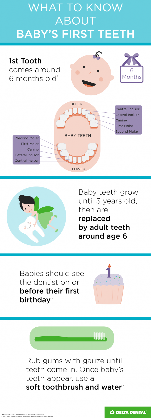 What to know about baby's first teeth infographic